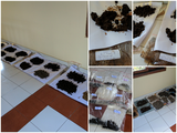 Soil sampel from Jambi is in drying process